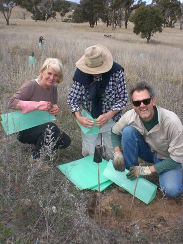 Landcare planting trees